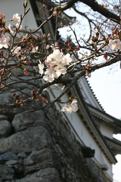 桜と石垣.jpg