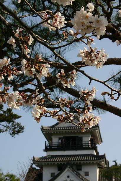 桜中心.jpg