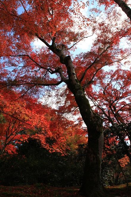赤い木.jpg